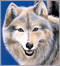 My beautiful Silver Wolf. I scanned this, don't come to me saying that you did! :P